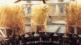 Hydrokultur kurz erklärt