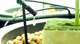 Offene Hyrokultursysteme mit Inertsubstraten