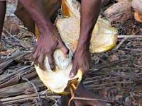 Kokosfasern im Allgemeinen